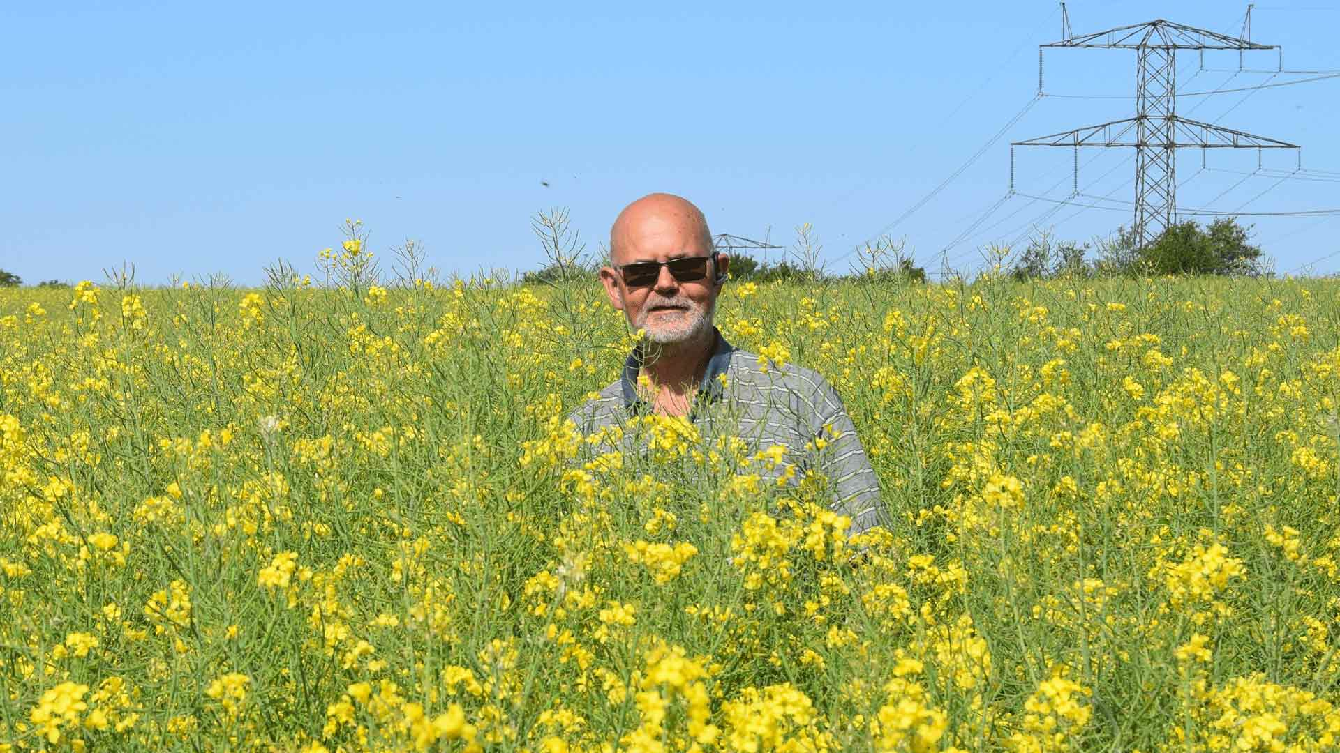 Here is Poul Soerensen in one of his rape fields.